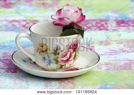Antique teacup with Camellia flower and painted background.