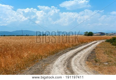 Farmer fields, sown with cereals. Road to farm