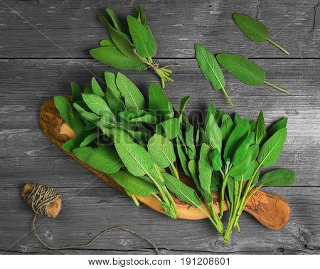 Fresh aromatic sage on Board. Sage leaves on gray old wooden background. A bunch of sage leaves tied with a rope.