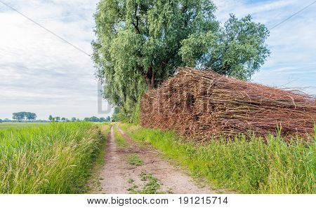 Picturesque image of a long sandy road with a large heap of willow branches bundled with ropes. It's springtime in the Netherlands.