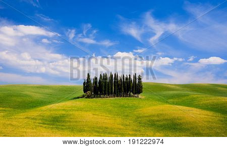 Rolling hills green fields and cypresses trees in Tuscany Italy