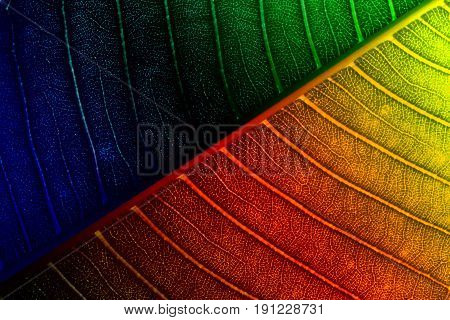 Abstract color and texture on leaves for background. Frangipani leaf.