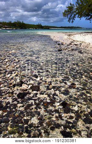 Blue   Foam Footstep  Island   Deus Cocos In Mauritius