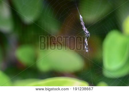 Close-up image of an insect trapped in the spider's net