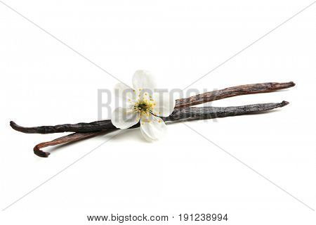 Dried vanilla sticks and flower on white background