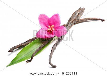 Dried vanilla sticks and flower on white background