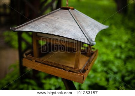 the device for feeding the birds wooden handmade in the forest