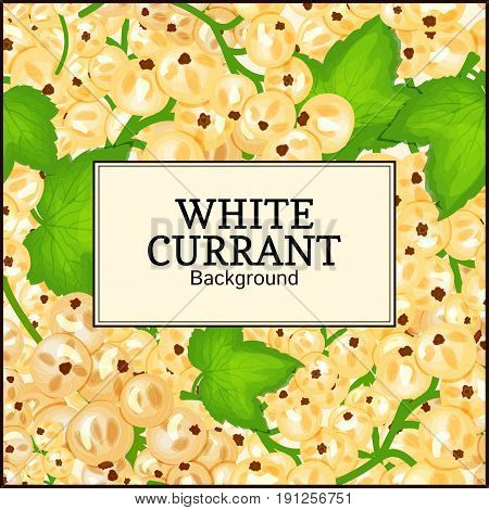 Square label on ripe white currant background. Vector card illustration. White berry fresh and juicy currant for packaging design food, juice, jam, ice cream, smoothies, detox, cosmetics cream, tea.