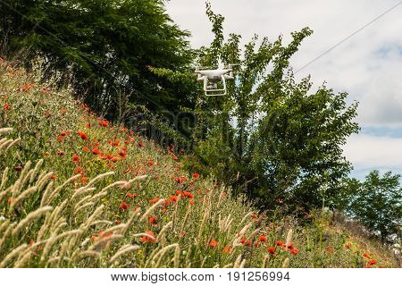 The flying machine flies over the field of red poppies and wildflowers