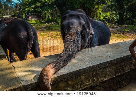 Elephant in the reserve in Sri Lanka