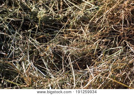 the hay of a grassland in summer