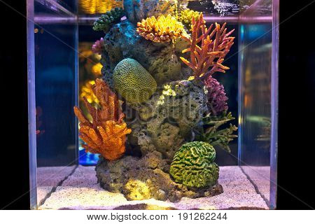 Colorful salt water fish tank with artificial corals