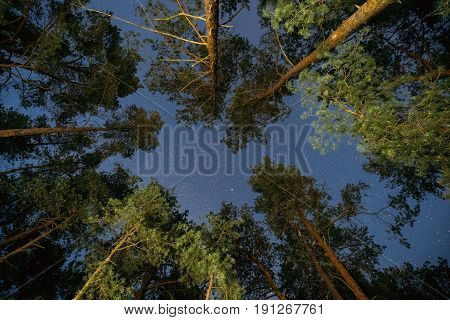 Natural Real Night Starry Sky Above Green Pine Trees In Forest Park. Eco Background Of Night Sky Glowing Stars  Above Summer Woods.