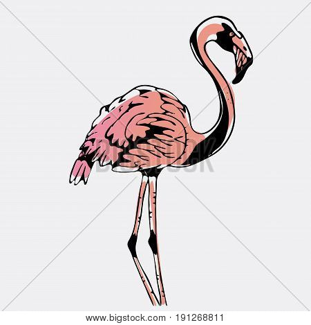 Hand-drawn pencil graphics, bird, flamingo. Engraving, stencil style. Logo, sign, emblem, symbol. Stamp, seal. Simple illustration. Sketch.