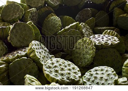 Fresh lotus seed pod. The lotus seeds are used extensively in traditional Chinese medicine and desserts.