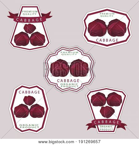 Vector illustration logo whole ripe vegetable red cabbage,with green rolls leaf,cut close-up background.Cabbage drawing pattern consisting of tag label fruit,ripe sweet food.Eat fresh head cabbages.