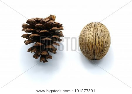Close up Pine cone isolated on white background