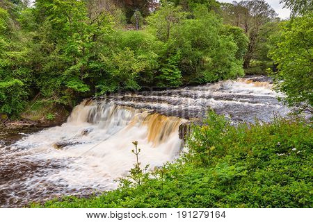 Aysgarth Middle Falls - Aysgarth Falls consist of three main falls lower middle and upper falls. They are spread over a mile of the River Ure in Wensleydale