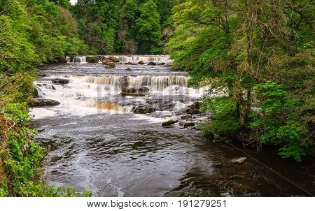 Aysgarth Upper Falls - Aysgarth Falls consist of three main falls lower middle and upper falls. They are spread over a mile of the River Ure in Wensleydale