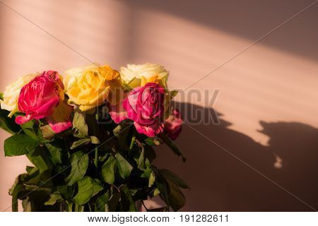 Bunch of wilted flowers deadhead roses with shadows poster