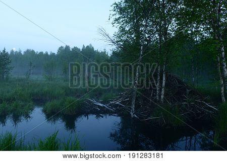 Beaver hut in a haze of fog in the light of the full moon