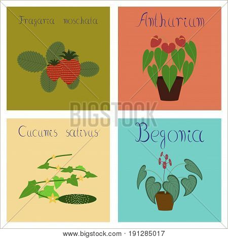 assembly of flat Illustrations nature Cucumis Anthurium Fragaria Begonia