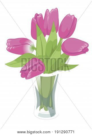 Glass transparent vase with pink tulips. Glass transparent vase with pink tulips. Vector flat illustration. Isolated on white