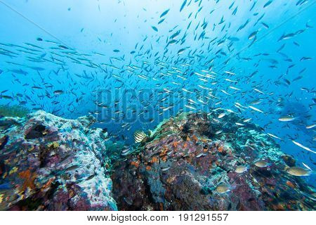 School Of Fish On The Rock