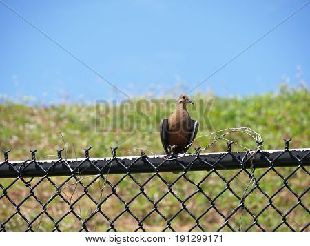 Bird on a fence A bird sits on top of a cyclone wire fence, front view