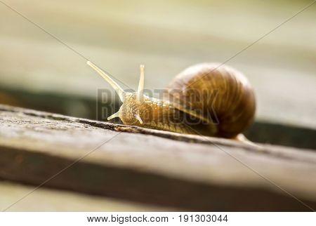 Close up portrait of a slow snail