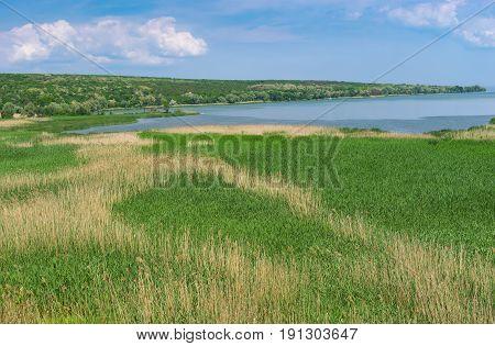 Summer landscape with rush fields in place where small river Karachokrak flows into Dnepr Ukraine
