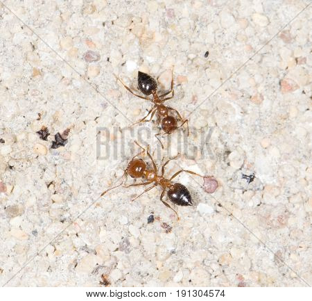 ants on the wall. close-up . A photo