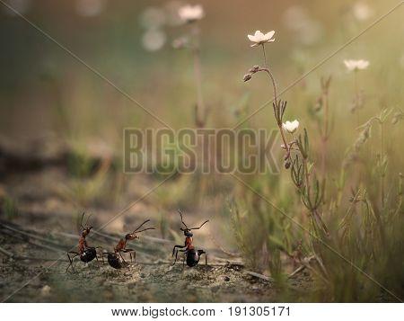 Three little ant among the huge plants. Macrocosm