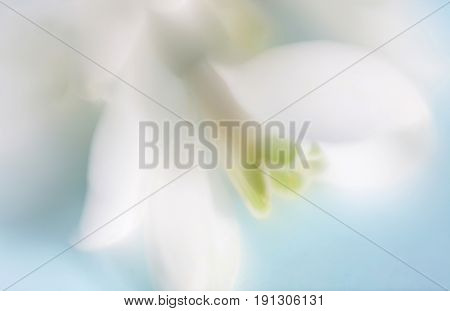 Soft focus flower background. Made with lens-baby and macro-lens.