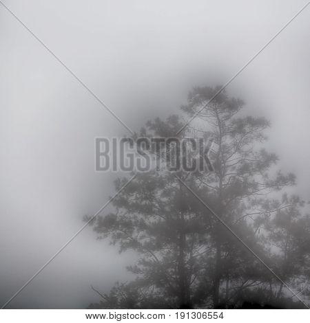 A Tree Hidden By The Rain Fog