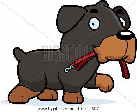 Cartoon Rottweiler Leash
