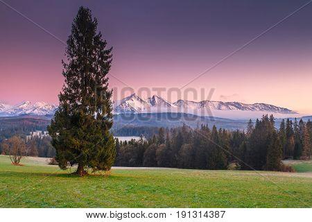 Green Alpine Meadow In The Mornong