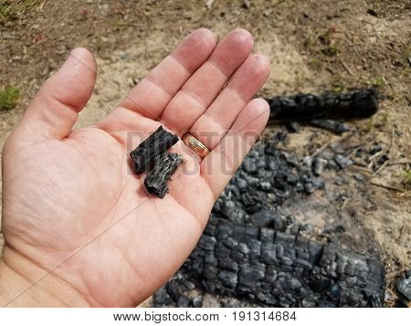 man's hand holding burnt wood and charcoal pieces