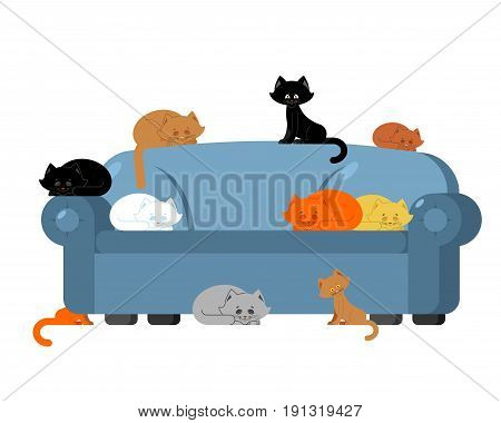 Many Cats On Couch. Kittens On Sofa. Furniture Cat Lady