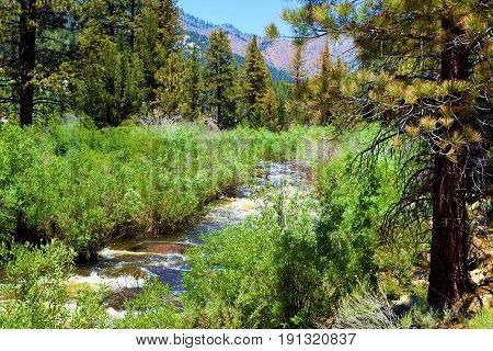 South fork of the Kern River with rapids from snowmelt during spring surrounded by a lush green riparian woodland and Pine Forest taken in the Sierra Nevada Mountains, CA