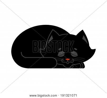 Sleeping Cat Black Isolated. Kitten Be Asleep. Sleep Pet