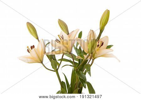 Bouquet of yellow lilies. A studio close up image of pretty yellow lilies against a white background.