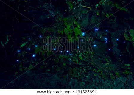 Amazing waitomo Glow worm in Caves, located in New Zealand.