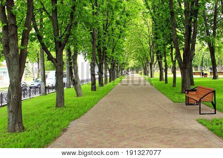 beautiful park with nice promenade path green grass benches and high big trees