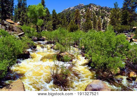 South Fork of the Kern River with raging waters from snowmelt during spring surrounded by a forest taken in the Sierra Nevada Mountains, CA