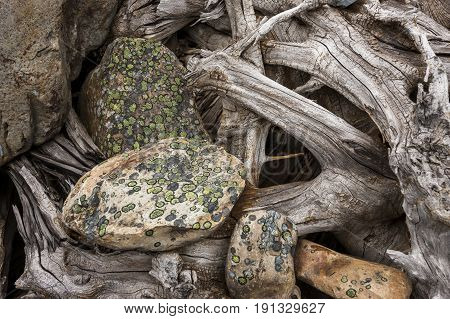 Lichen covered rocks and roots abstract. An abstract nature image of lichen covered rocks and old tree roots.