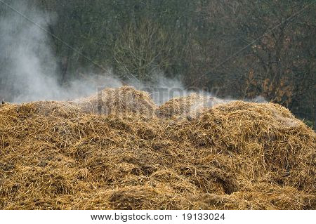Steaming compost heap
