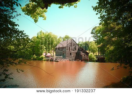 A plant vignette view of Yates Millpond in Raleigh North Carolina in vintage colors.