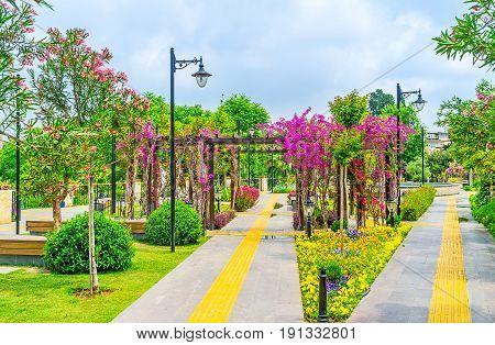 The Flowers In Mermerli Park