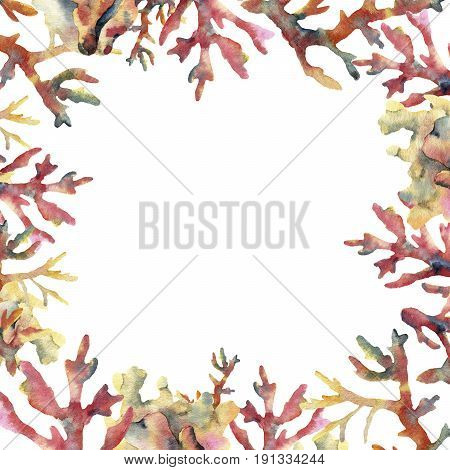 Watercolor coral card. Hand painted underwater frame with coral branches isolated on white background. Tropical sea life illustration. For design, print or background